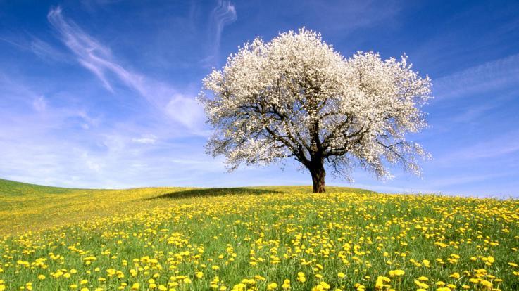 Bem-vinda Primavera!!!