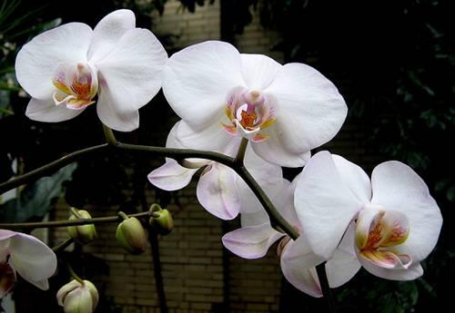 Uma flor para S.M.C.(03.01.1969-31-03-2011)