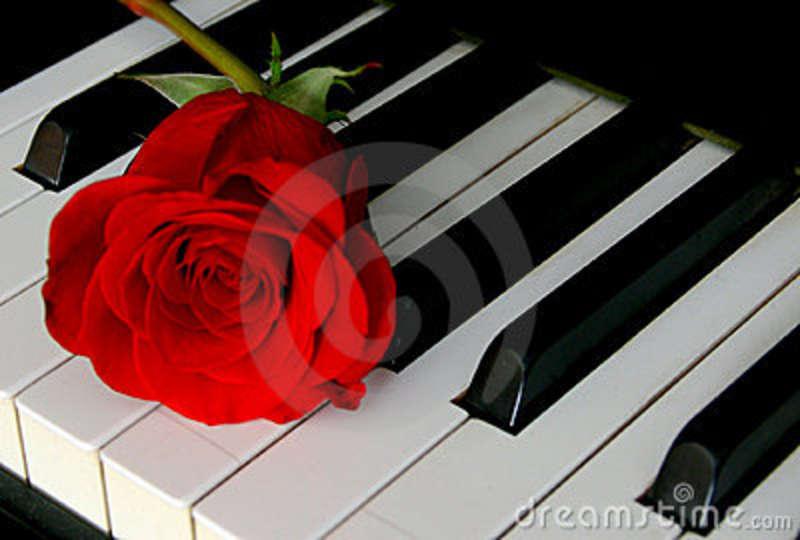 rosa-e-teclado-de-piano-12350428