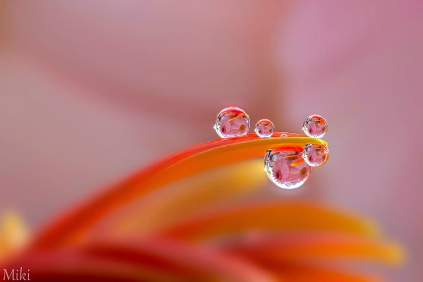 Charming-macro-world-captured-by-Japanese-photographer-Miki-Asai-18